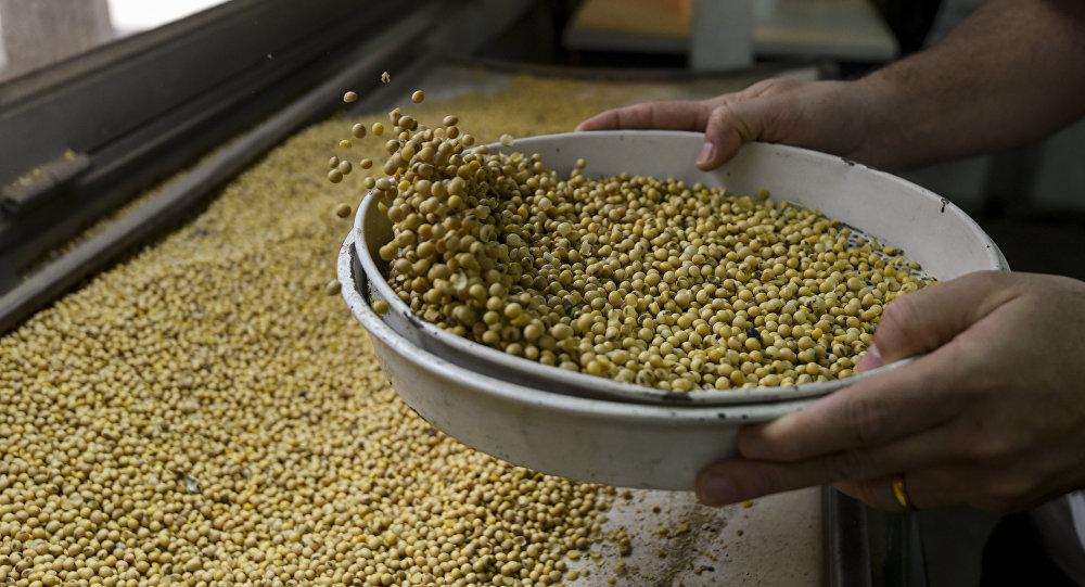 中国国际商会:俄罗斯应积极参与对华大豆出口