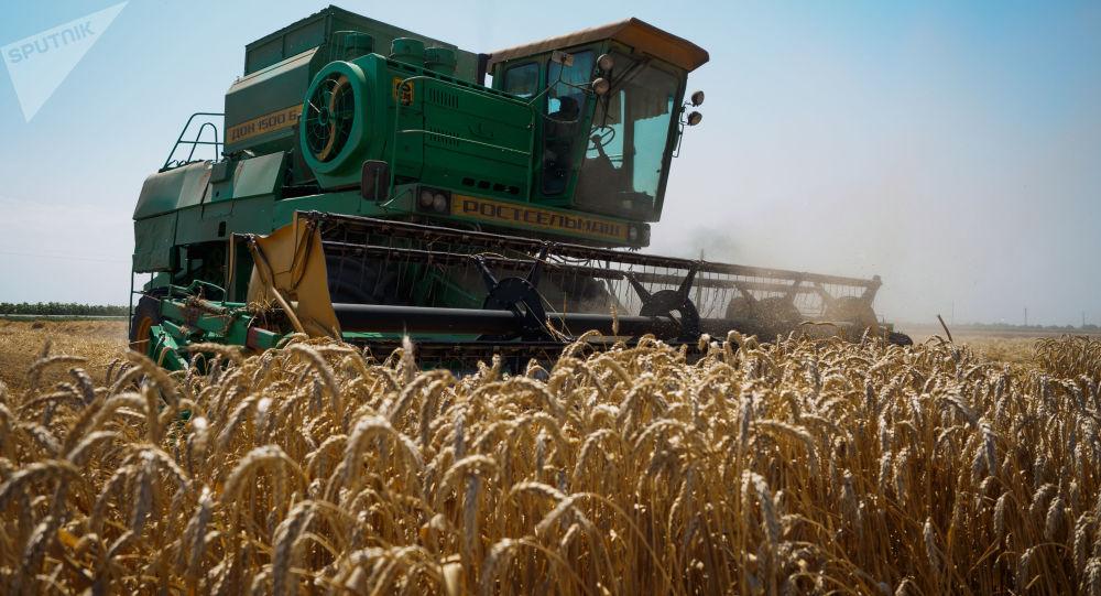 普京谈俄中在滨海边疆区成立农业控股公司的计划