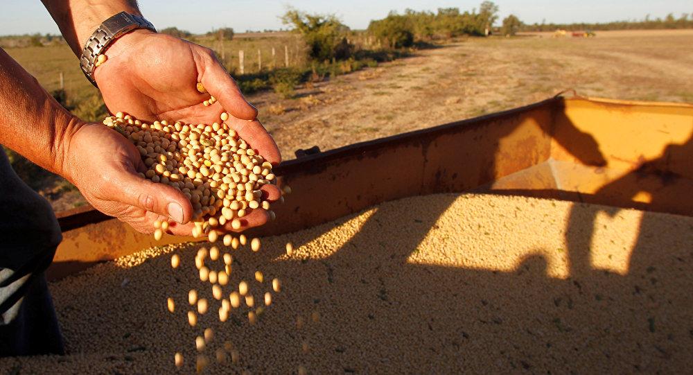 俄农业集团:中国到2021年可成为俄食品出口主要市场之一