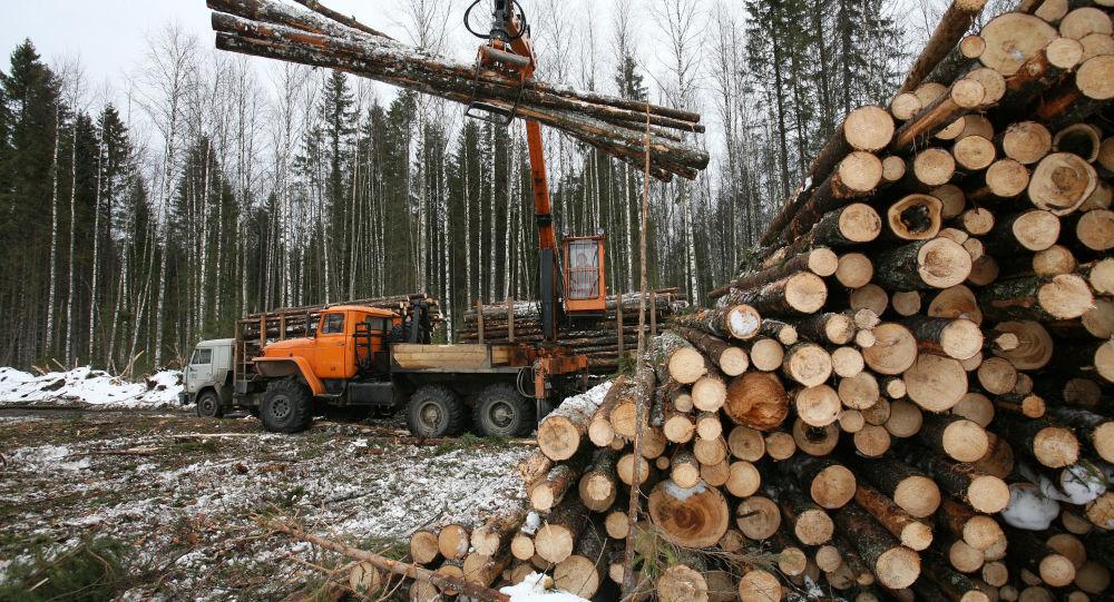 中国企业耗资1700万元人民币在俄乌苏里斯克兴建的木材加工厂开工