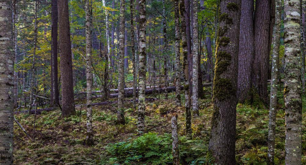 中国外交部:鼓励中俄企业在森林资源培育、林地补种等领域开展合作