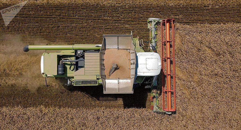 俄农业部希望中国能在一年内对俄所有地区的小麦开放市场