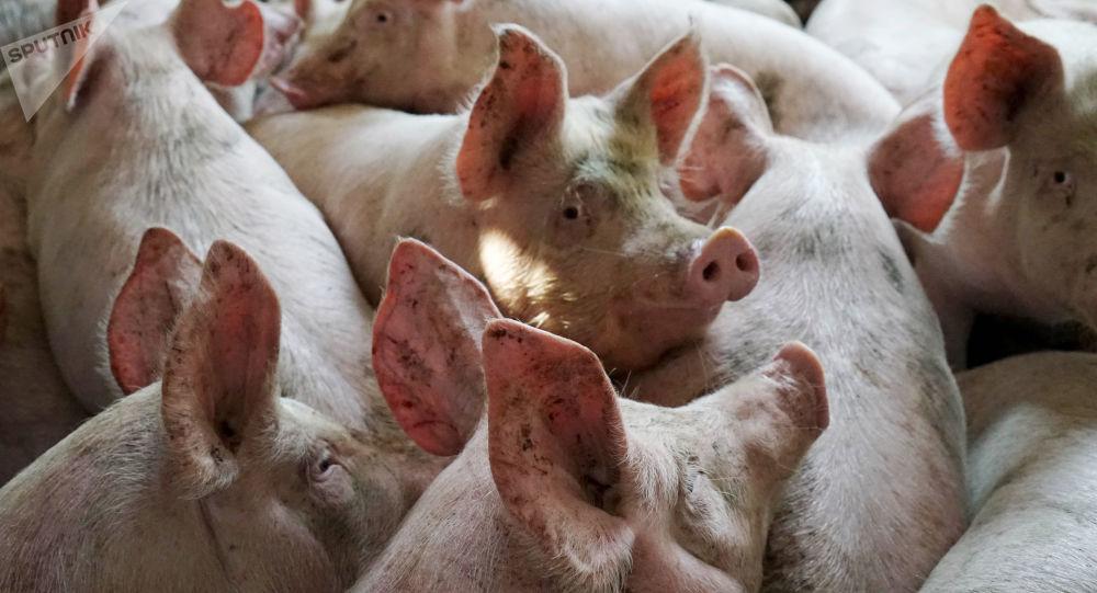 俄农业部希望中国一年内对俄开放牛肉和猪肉市场