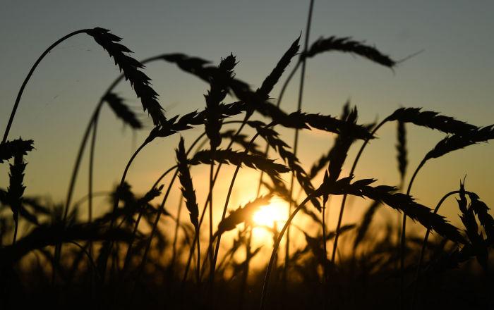 俄亚工业企业家联合会:中国可能向库尔干州投资5000万美元发展农业