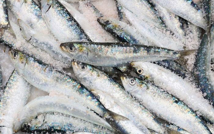俄联邦渔业署:中国开始向俄罗斯采购斑点莎瑙鱼