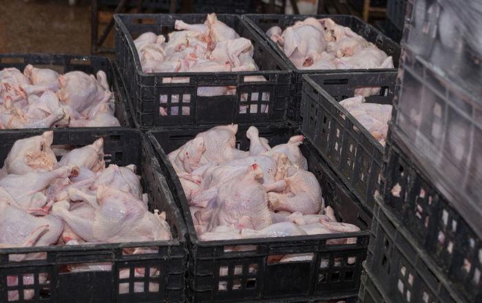 俄罗斯铁路运输冷冻鸡产品首柜经新物流线路抵达重庆口岸